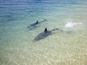 Dolphin Swim, Australia